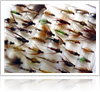 Different-Types-of-Fly-Fishing-Flies-1000-ffccccccWhite-3333-0.20.3-1