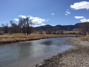 Ruby river fly fishing report healing waters lodge for Ruby river fishing report